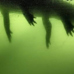 Выставка «Зона затопления»