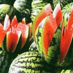 Арбузно-дынные выходные на Летнем Рынке «Фермерия»