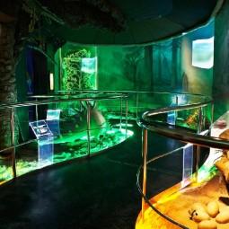 День эволюции в Дарвиновском музее 2017
