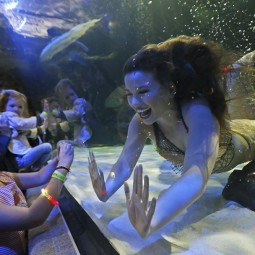 Подводное шоу «Приключение русалочек» 2021