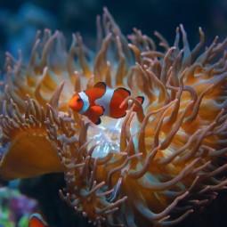 Фестиваль «Подводная оранжерея» 2020