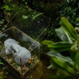 Выставка «Ускользающая красота»