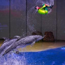 Мюзикл на воде «Сон в летнюю ночь» в «Москвариуме»