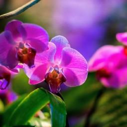 Выставка орхидей в «Аптекарском огороде» 2021