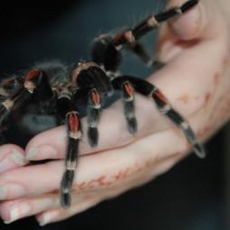 «День паука» в Биологическом музее 2017