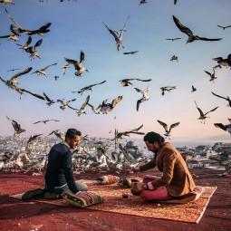 Выставка победителей конкурса фотожурналистики имени Андрея Стенина 2018
