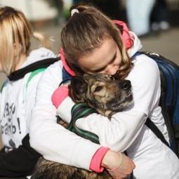 Выставка бездомных собак и кошек «Надо брать! Осенью!» 2017