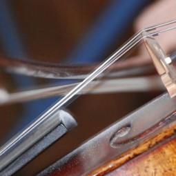 Выставка «Тайны скрипичного леса»