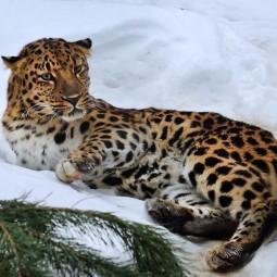 Всемирный день экскурсовода в Московском зоопарке 2019