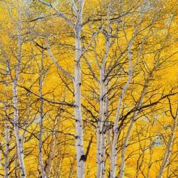 Выставка «Блистательный цвет Кристофера Беркетта: новые работы»