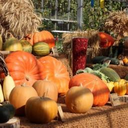 Фестиваль цветов, урожая и искусства «Краски осени» 2017