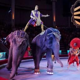 Цирковое шоу «Лабиринт» 2020/2021