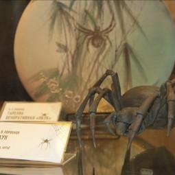 День паука в Биологическом музее 2019