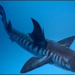 Выставка «Древние акулы. История одной коллекции»