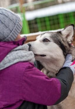 Питомник ездовых собак «Северный»