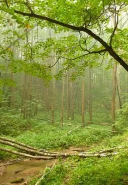 Парк «Битцевский лес»