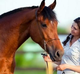 Бесплатные лекции о лошадях по выходным
