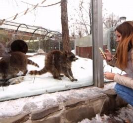 Татьянин день в Московском зоопарке 2019