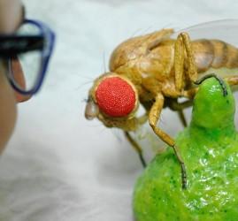 Выставка «Когда ты ростом с муравья. По следам Карика и Вали»