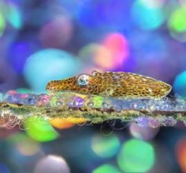 Фестиваль подводной фотографии «Дикий подводный мир» 2021