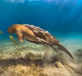 Фестиваль подводной фотографии «Дикий подводный мир» 2018