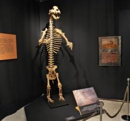 Выставка «Храп пещерного медведя»