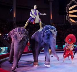 Цирковое шоу «Лабиринт»