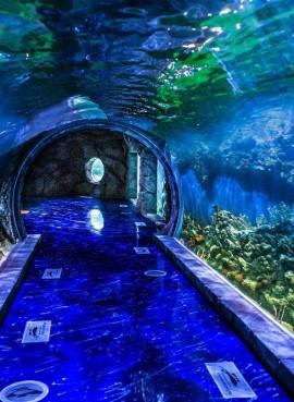 Крокус Сити Океанариум