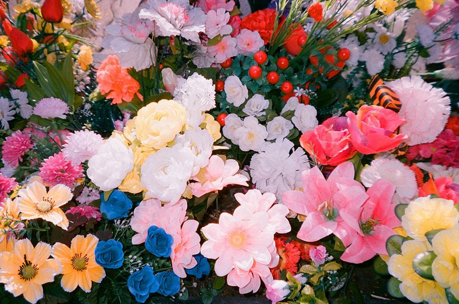 Выставка «Pushing upthe wild daisies»