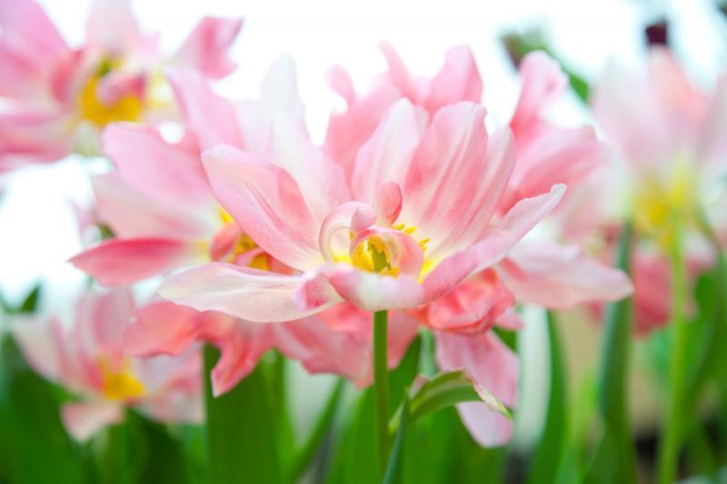 Выставка «Цветов весны причудливые краски» 2018