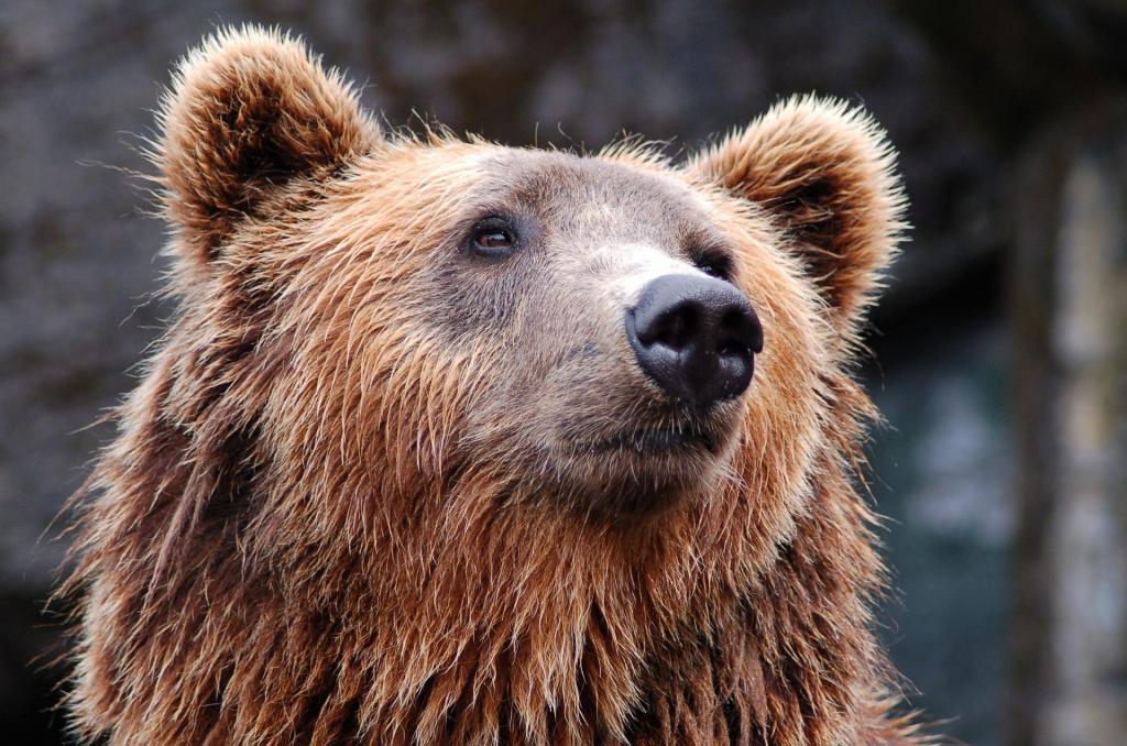 День города вМосковском зоопарке 2019