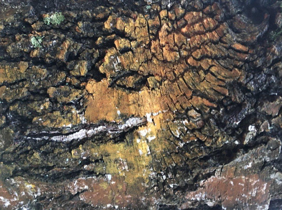 Выставка «You are never alone inthe forest– Тыне один влесу»