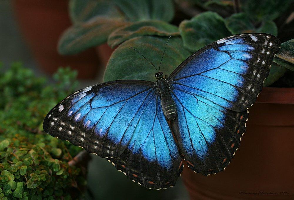 «День бабочки» вБиологическом музее 2016