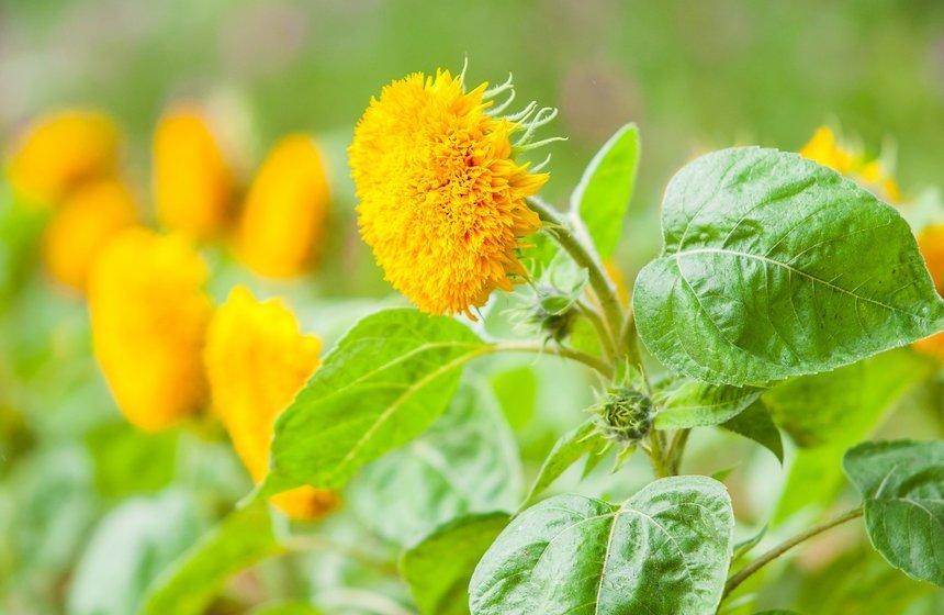 Фестиваль цветов, урожая иискусства «Краски осени» 2019