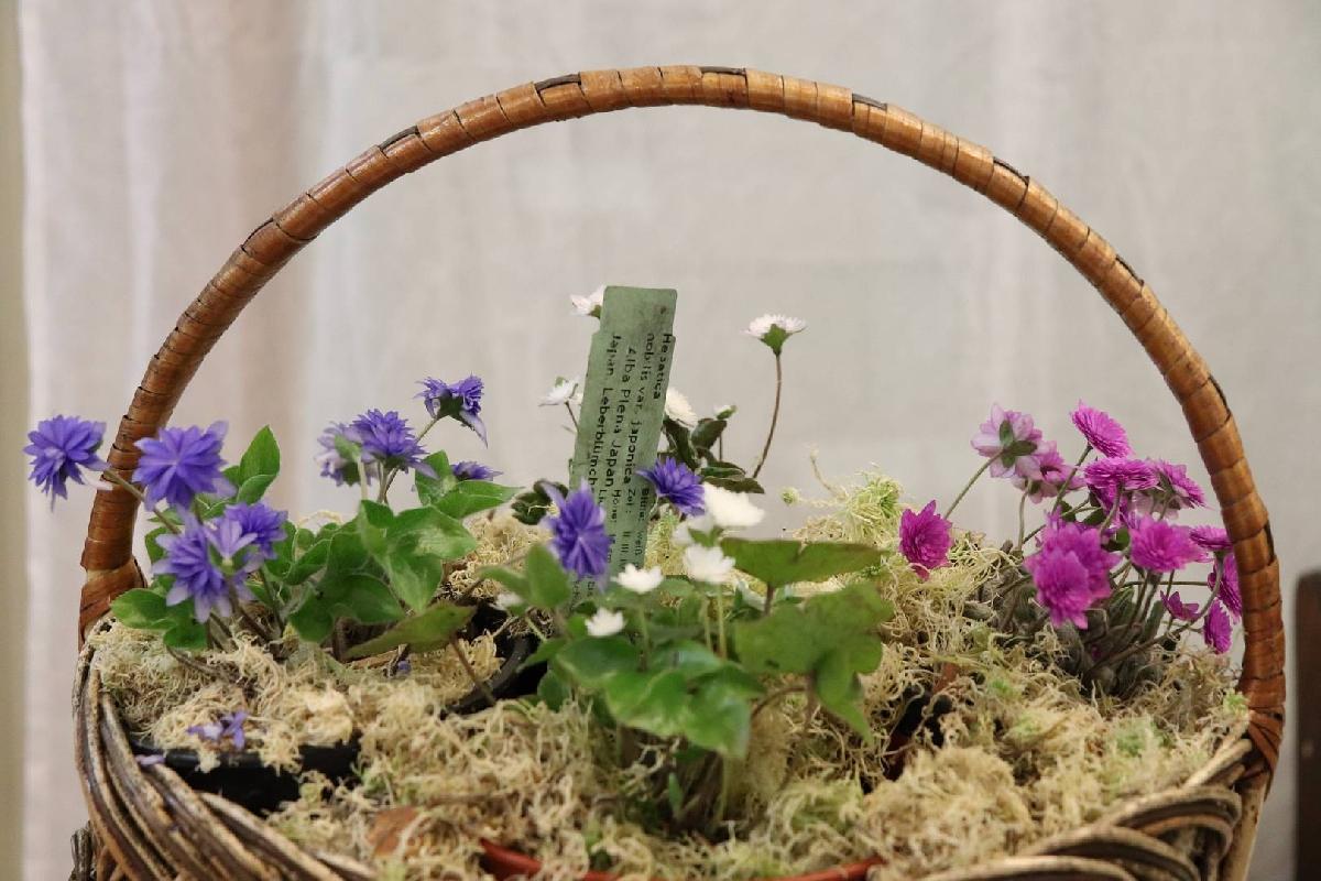 Выставка «Первые цветы весны»