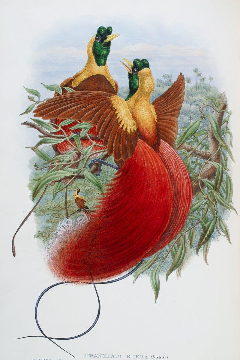 Выставка «Остров папуасов ирайских птиц»