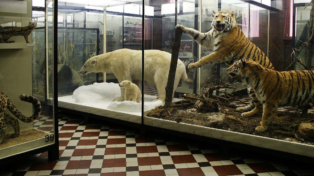 Онлайн-трансляции Зоологического музея 2020