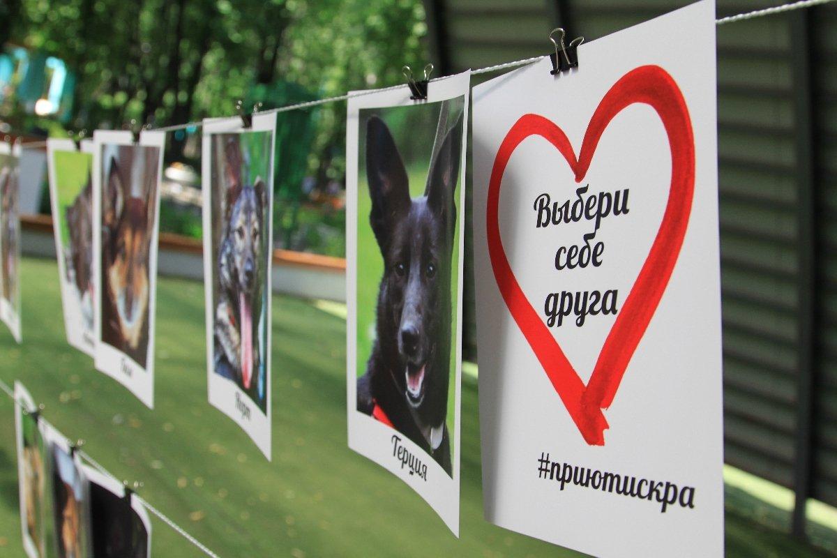 Выставка-пристройство собак ИСКРА-FEST 2018