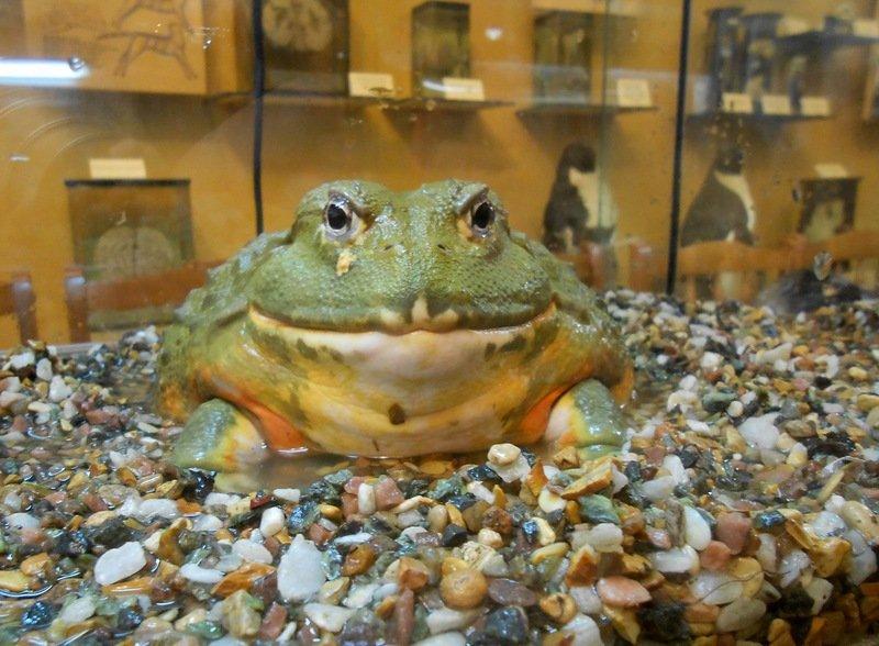 День болот вБиологическом музее 2017