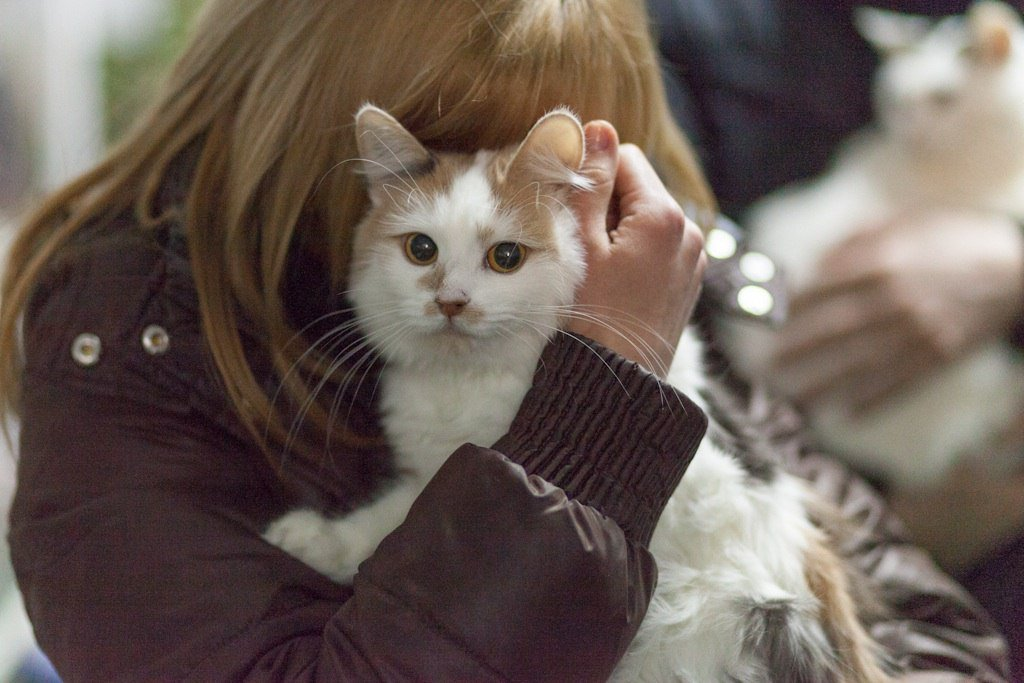 Выставка «Каждой кошке нужен дом»