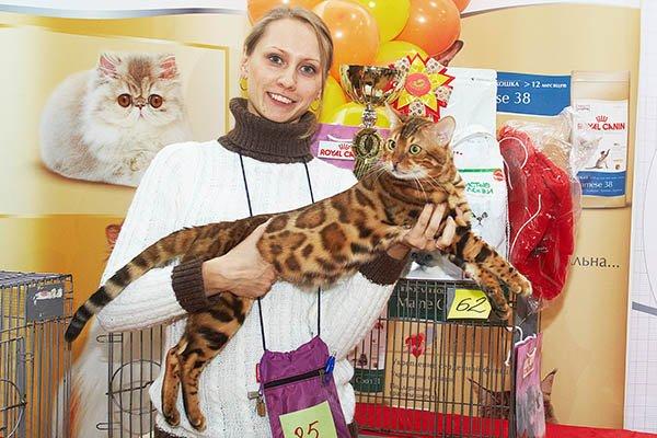 Международная выставка кошек «Мистер Кот» вСокольниках» 2017