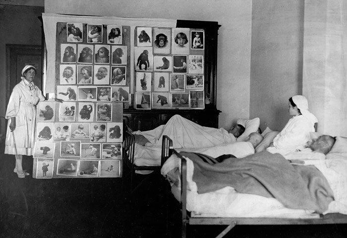 Выставка «Дарвиновский музей вгоды Великой Отечественной войны 1941–1945 гг.»