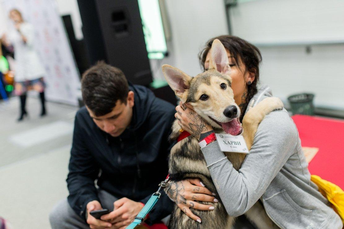 Благотворительный фестиваль «Собаки, которые любят» 2019