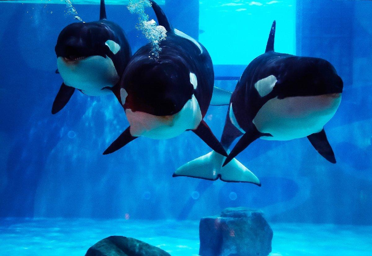 Неделя китов в«Москвариуме» 2019