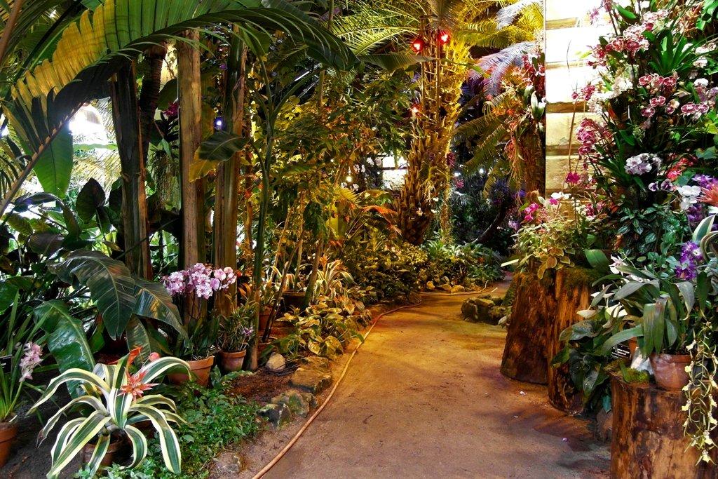 VII ежегодный фестиваль «Тропическая зима»