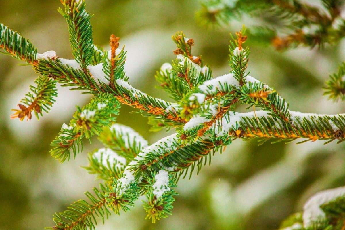 Экологическая акция «Вторая жизнь новогодней ели» 2017
