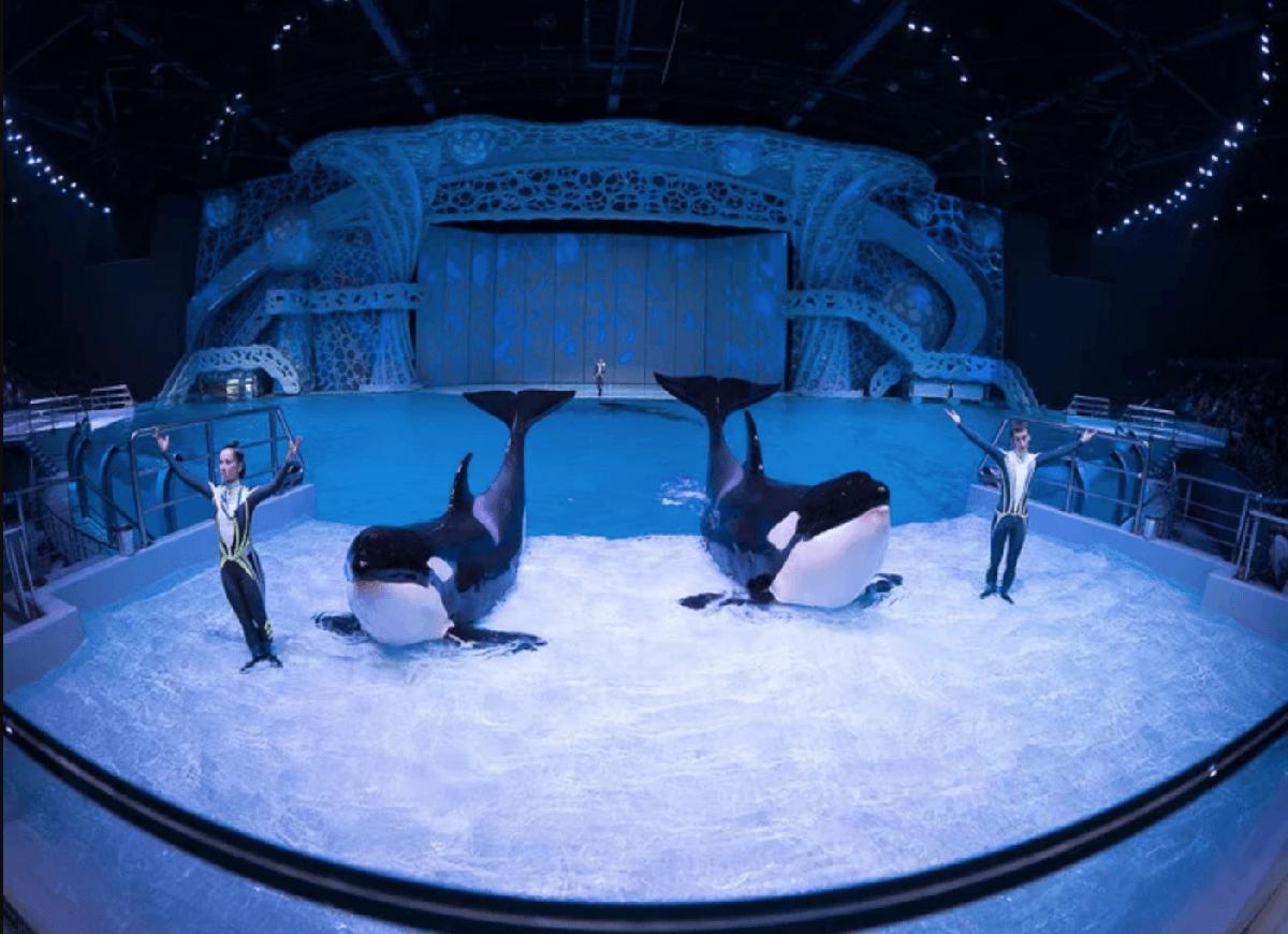 Шоу «Тайна четырех океанов» 2018