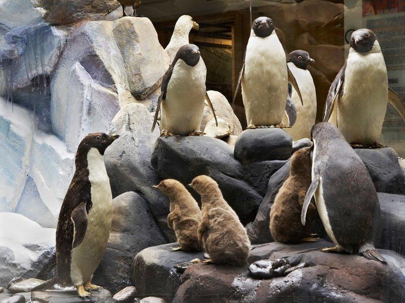 День пингвина вДарвиновском музее 2020