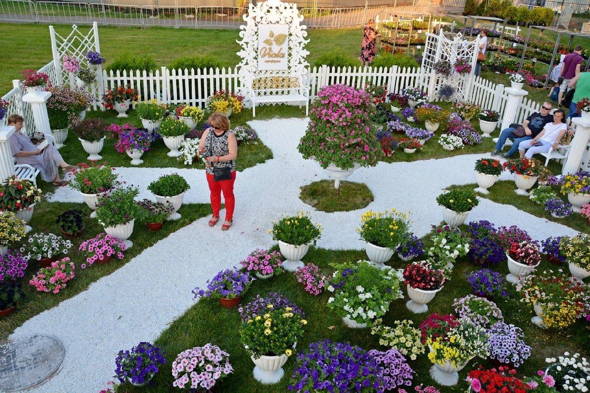 Выставка роз в москве 2017