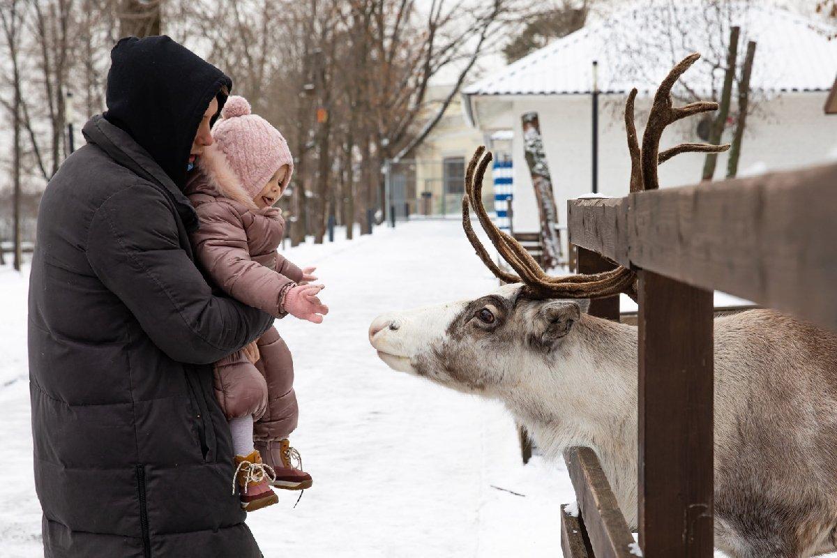 Новогодние Ёлки наГородской Ферме наВДНХ 2020/2021